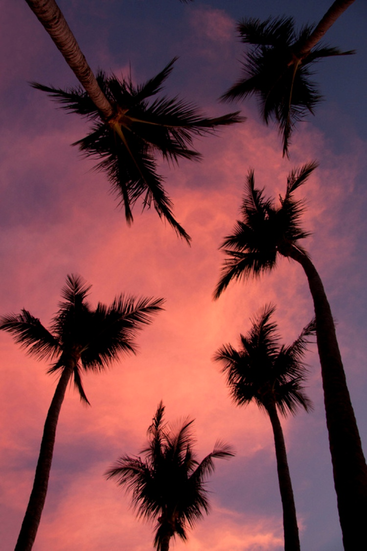 palm trees2