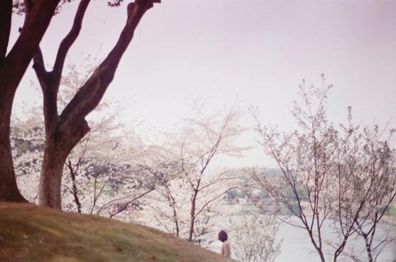 li_hui_hidden_sakura